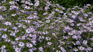 Read more about the article RHS Garden Rosemoor